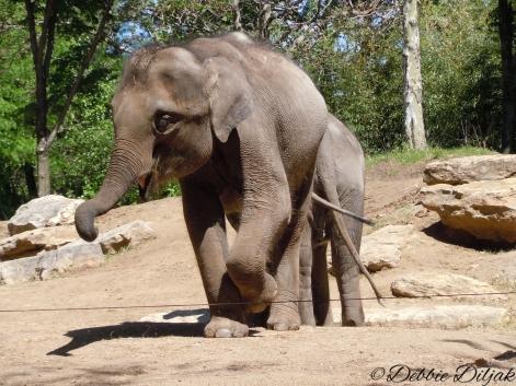 Baby elephants are still quite big!
