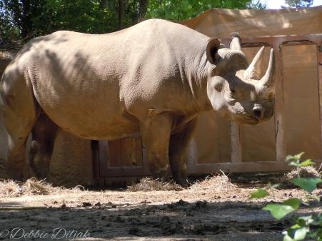 I captured this rhino soaking up the sun.