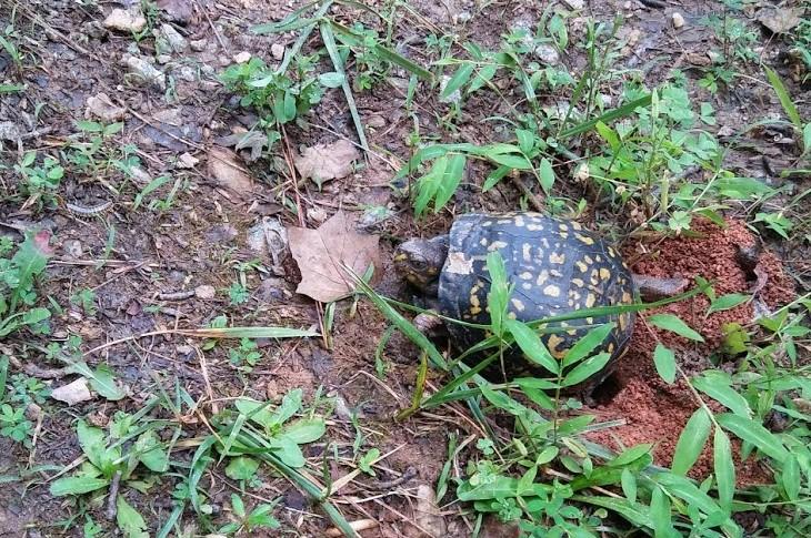 turtle turtling (2)